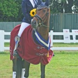 Hickstead International 6yr old Champions!