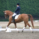 May Frizzante, my first dressage pony.